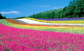 想要在夏天全家一起去旅行!魅力自然景觀與北海道美食之旅6日遊
